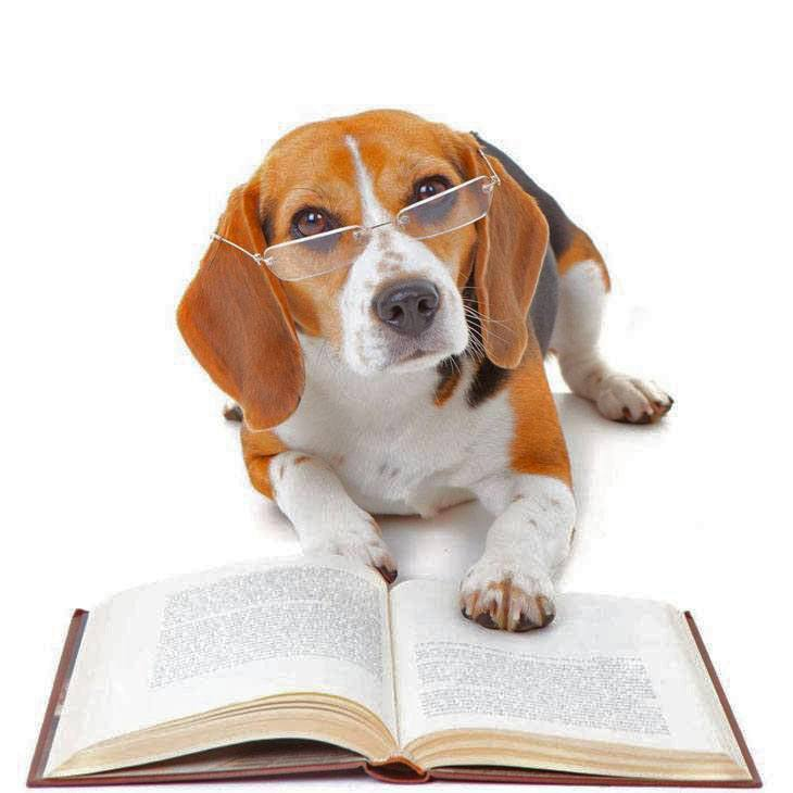 Beagle learning how to be trained