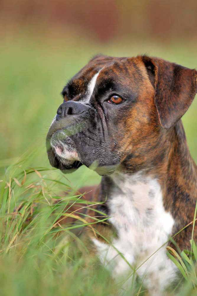 We think Baxter, Whitney, Valiant or Nikita would be good choices as popular Boxer dog names for this beauty. Find more here... http://www.dog-names-and-more.com/Boxer-Dog-Names.html