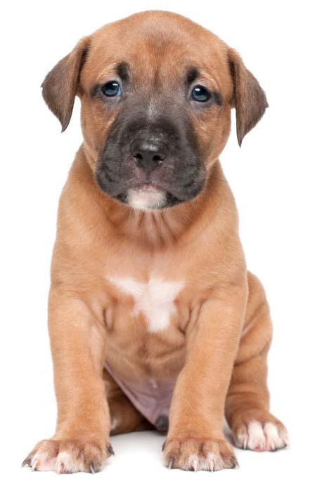 Jake's owner loved the unique Pit Bull names found here... https://www.dog-names-and-more.com/Pit-Bull-Names.html