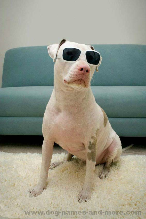 Cool Pit Bulls can find cool Pit Bull names here... https://www.dog-names-and-more.com/Pit-Bull-Names.html