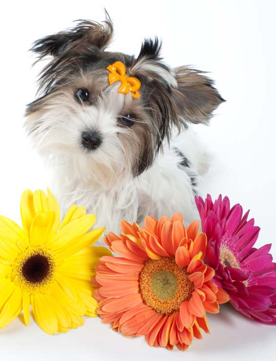 Cute puppy posing with flowers