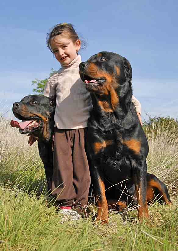 Big dogs with small girl