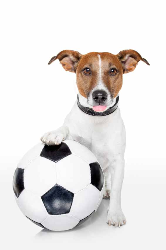 Soccer playing dog looking for girl puppy names