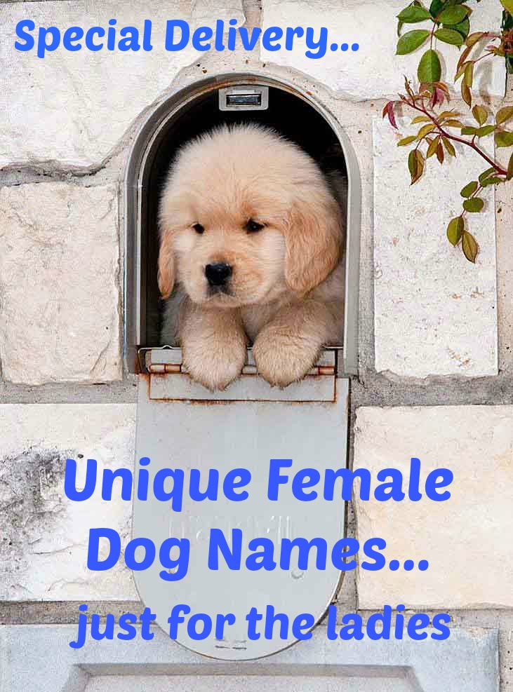 Cute puppy looking for female dog names