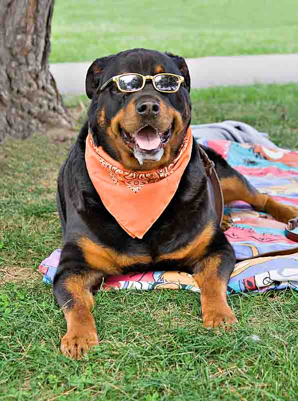 Relaxing Rottweiler looking for cool female dog names