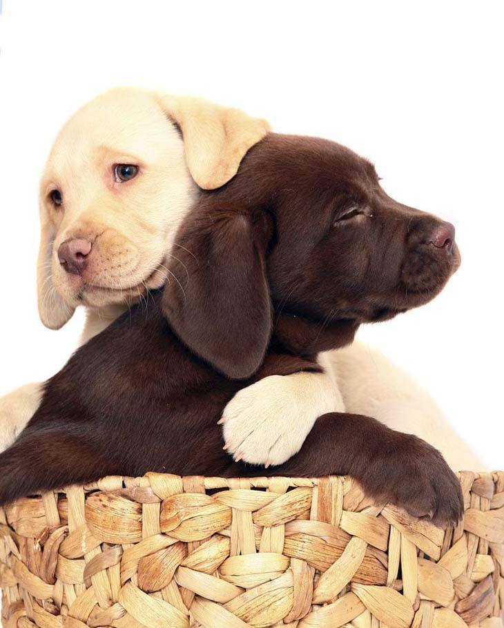 Juliet and Romeo love their new Labrador Retriever names... https://www.dog-names-and-more.com/Labrador-Retriever-Names.html