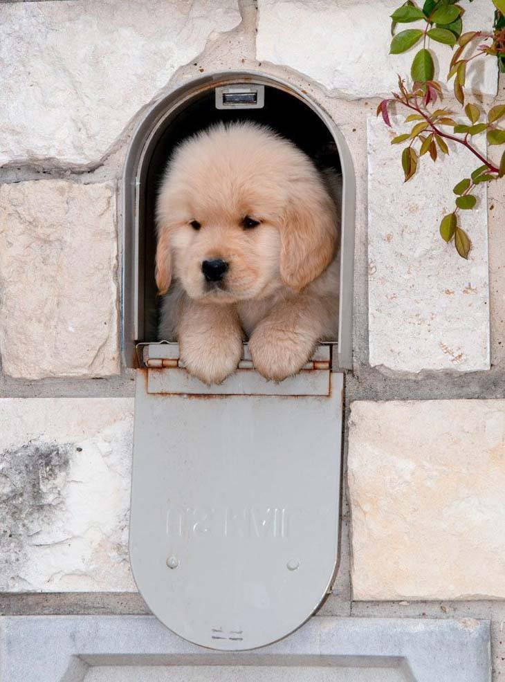 Adorable puppy special delivery