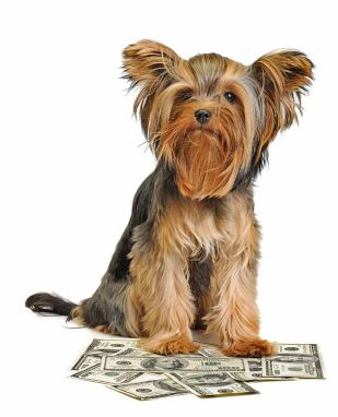 Money loving dog
