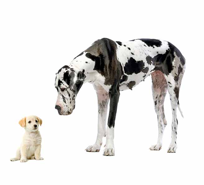 Masculine dog names work well on big and small dogs