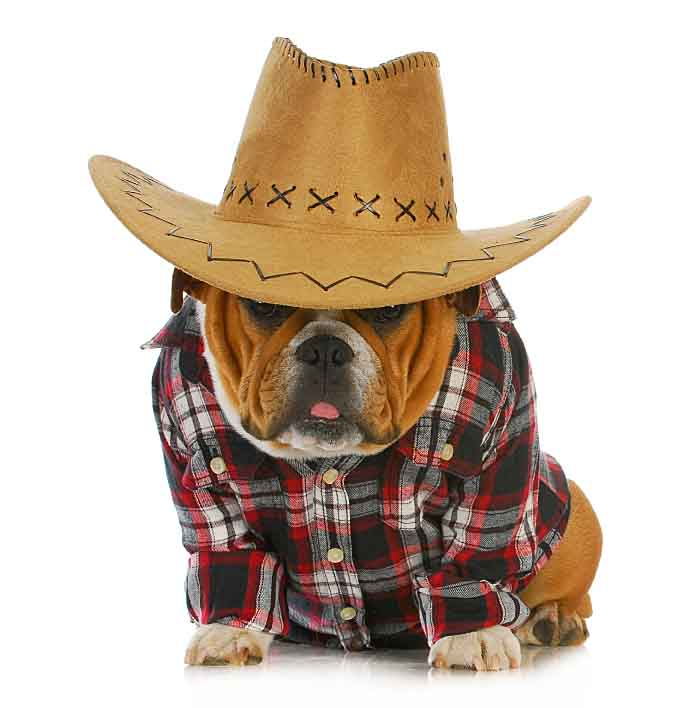 Hillbilly dog looking for redneck dog names