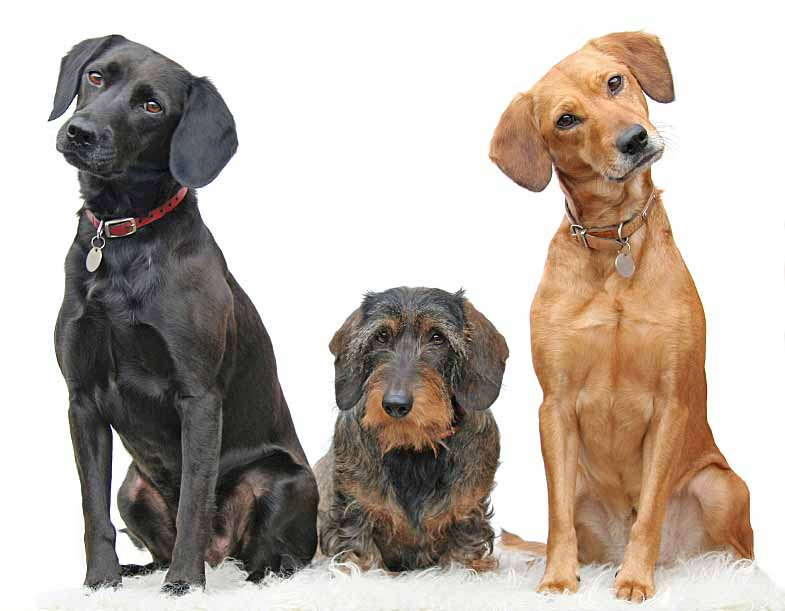 Native American Dog Names Perfect For Males And Females