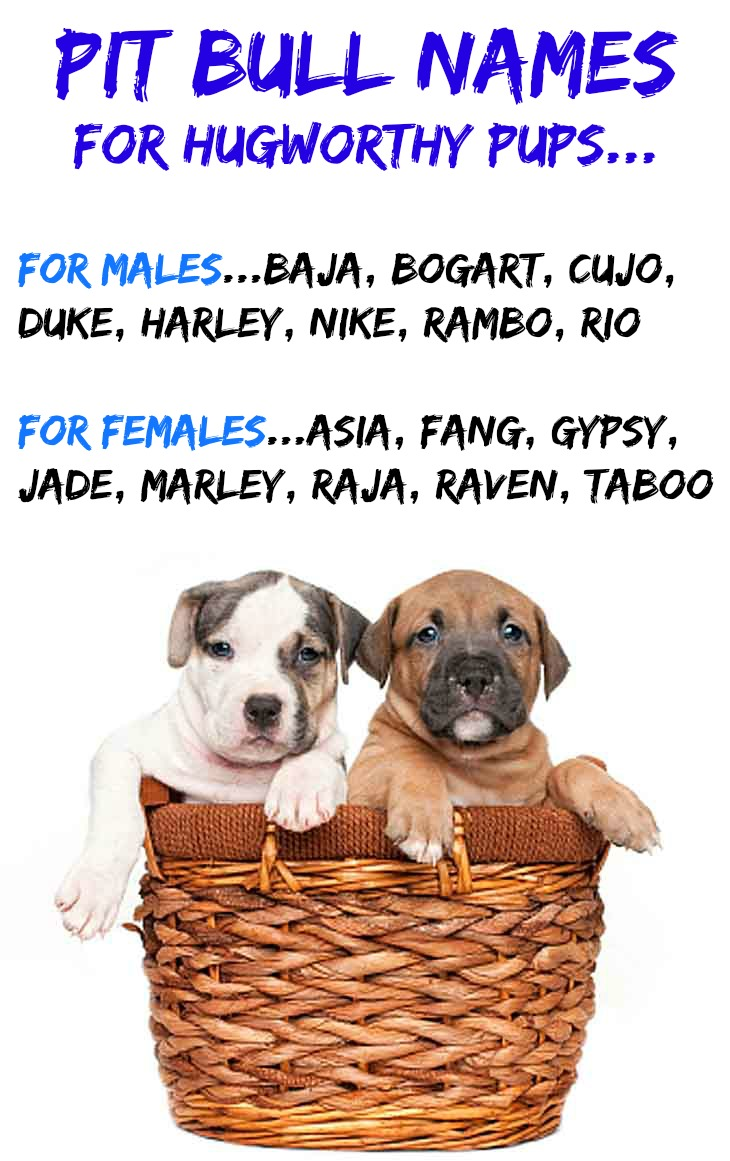 ... just for them... http://www.dog-names-and-more.com/Pit-Bull-Names.html