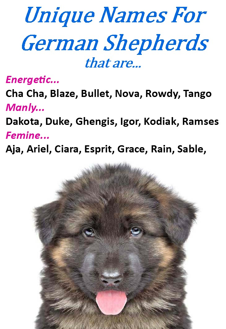 Dogs Names Starting By N