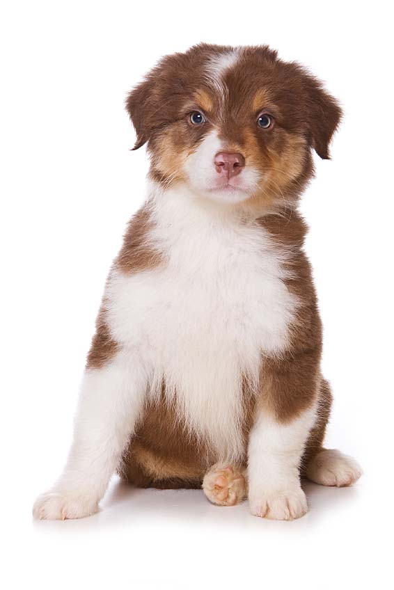 Cute Female Puppy Names For Small Dogs