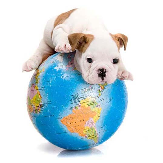 World traveling puppy