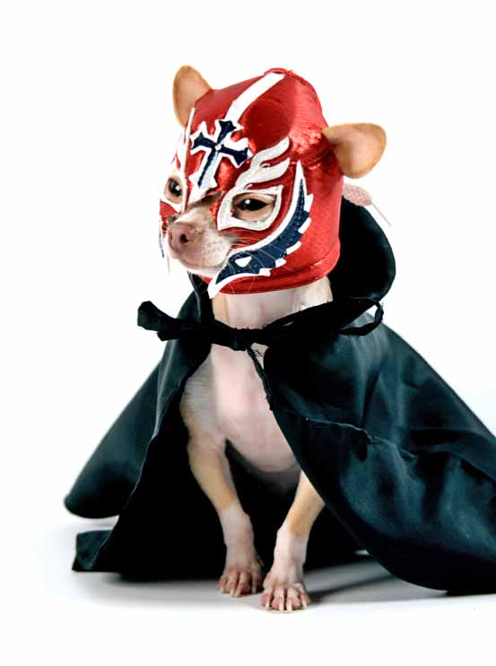 Chihuahua professional wrestler