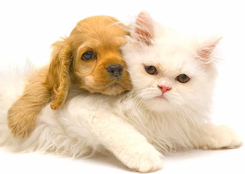 Puppy with kitty pal