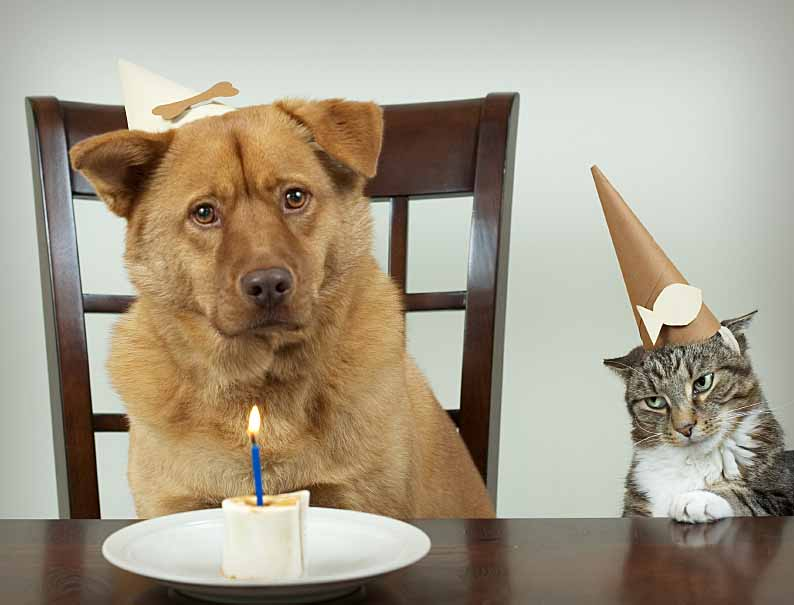 Dog and cat at boring birthday party