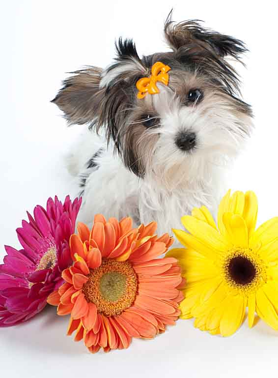 Cute girl dog posing with flowers