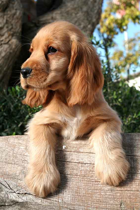Brown Dog Names: Male & Female Names For Brown Dogs