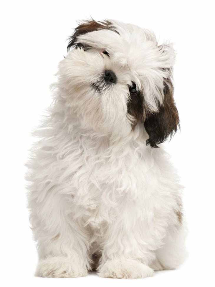 Female Dog Names Popular Ideas For The Cute Girl Puppy