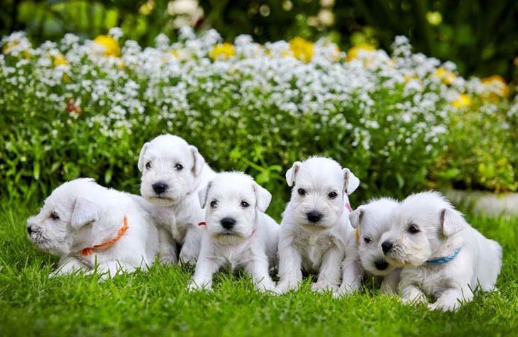 These pups are the pick of the litter