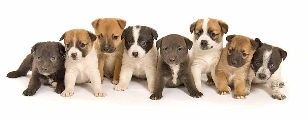 Cute puppies ready to pounce on anything that comes their way