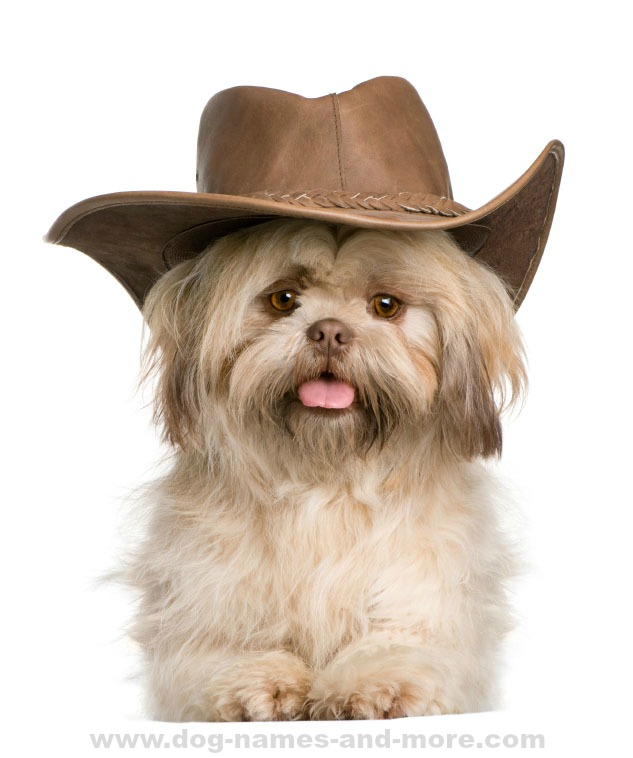 Good Dog Names Boy Shih Tzu