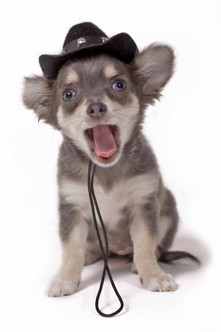 Unique Dog Names - Unusual Puppy Names For Your Boy