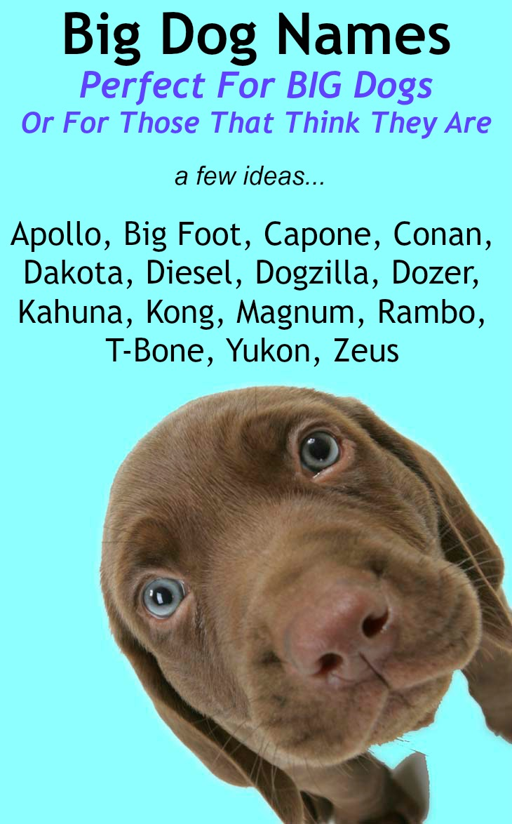 Good Boy And Girl Names For Dogs