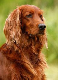 History Of Pet Dogs