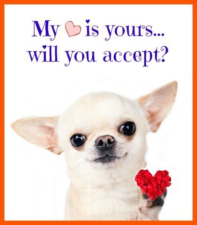 Chihuahua puppy offers her heart...will you accept?