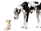 cute small and large dog