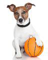 basketball playing dog