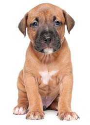 Cute Male Pitbull Dog Names How To Stop Puppy Chewing Skirting Boards