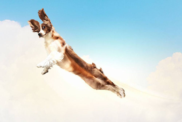 Flying dog of course