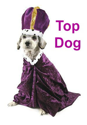 Top Dog Names: Just What Are The Most Popular Top Ten?