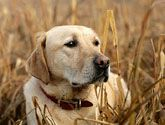 Tough Dog Names For Big Hunting Dogs