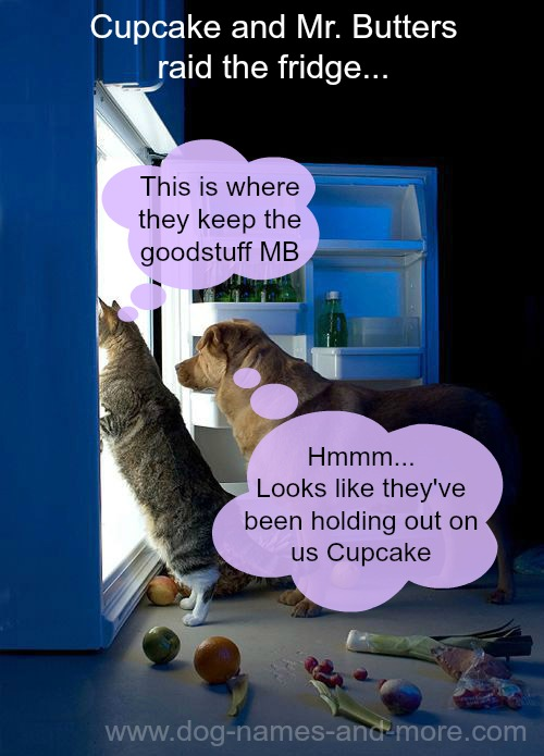 dog and cat raid the refrigerator