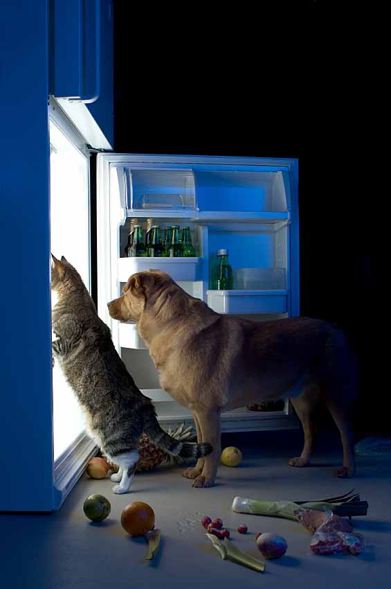 Dog and cat pull a midnight raid