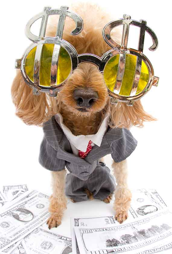 Rich dog that loves money