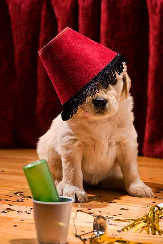 Unusual Names For Dogs After Alcoholic Drinks