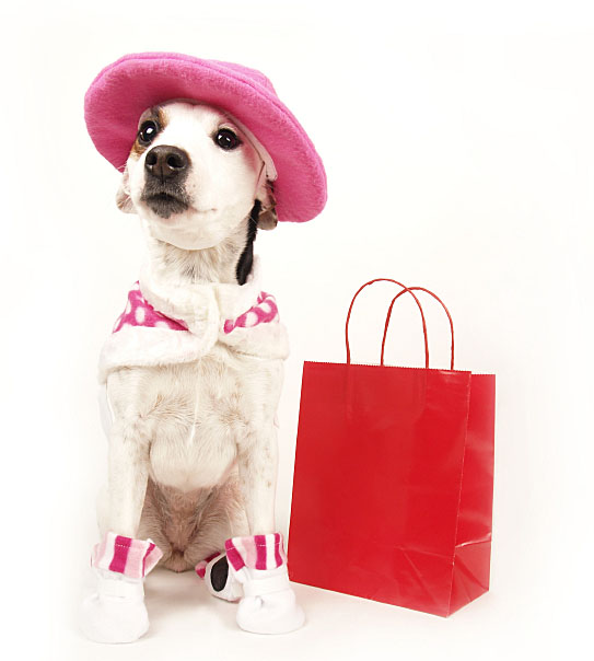 Fashionable dog going to the mall