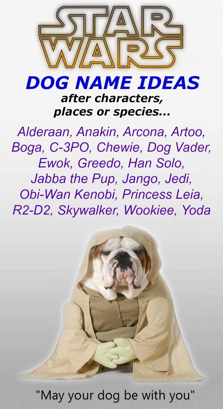 Good Star Wars Names For Cats