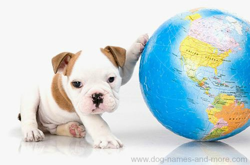 Foreign Dog Names Unique Names For Male Or Female
