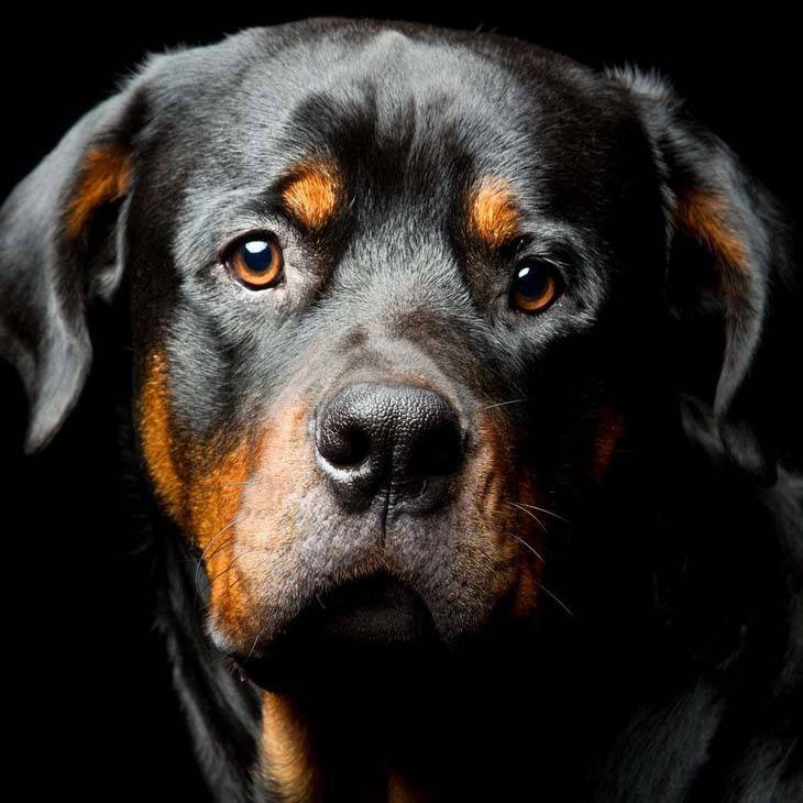Names That Mean Calm Dogs